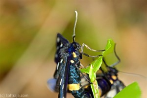 Neke vrste metulj
