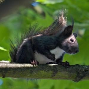 Veverica se pa vsem skupaj smeji